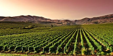 Visit picturesque vineyards, taste wonderful wines and spend the night