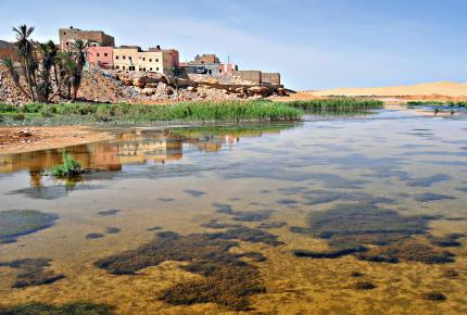 A postcard from Western Sahara