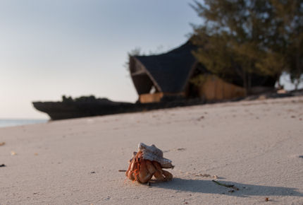 Chumbe's sands are shared only with the local wildlife