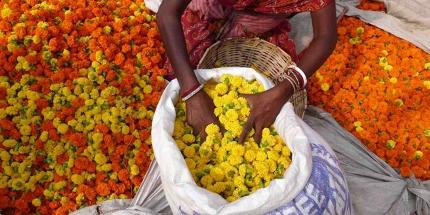 Colourful marigolds in Kolkata