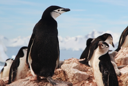 Join a waddle of penguins at Simon's Town.