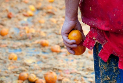 War and pith: Surviving the Battle of the Oranges | World Travel Guide