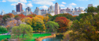 New York City blooms in the autumn