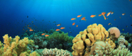 Tobago's reefs are abundant with marine life