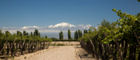 Vines grow in the shadow of the Andes in Mendoza