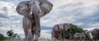 Zambia boasts bountiful wildlife, but with fewer crowds