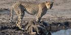 Discover Zimbabwe's abundant wildlife