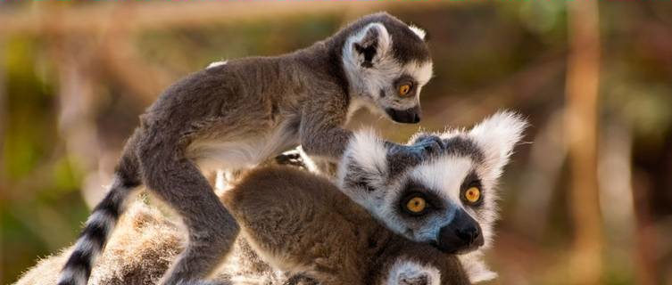 Madagascar Travel Guide and Travel Information