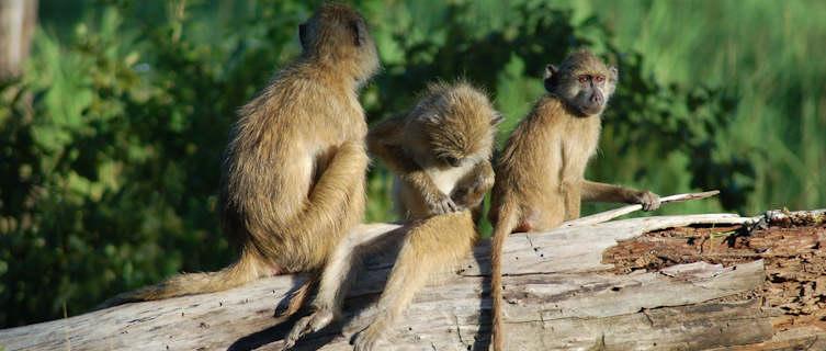 Monkeys,