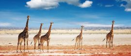 Etosha National Park, Namibia