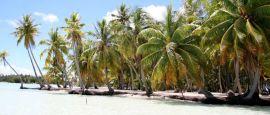 Tahiti Motu Picnic