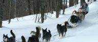 Dog sledding, Furano